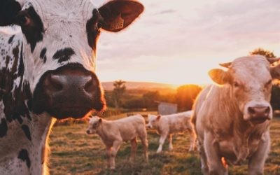 Climate Corner – The High Price of Meat